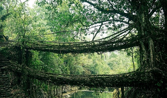 Art works that survived the passage of the years, traveling around the world, old bridges, art works, scenes of nature, Art Space, Basel Shows  Art works that survived the passage of the years Root Bridge In India